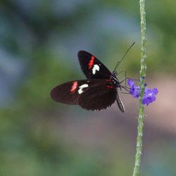 butterfly-4853713_1920