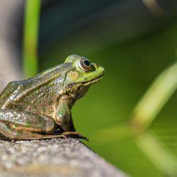 frog-4375792_1920